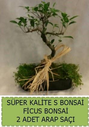 Ficus S Bonsai ve arap saçı  Kocaeli çiçekçiler