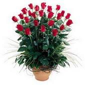 Kocaeli güvenli kaliteli hızlı çiçek  10 adet kirmizi gül cam yada mika vazo