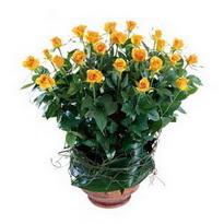 kaliteli taze ve ucuz çiçekler  10 adet sari gül tanzim cam yada mika vazoda çiçek
