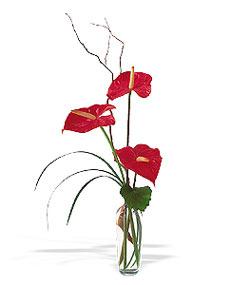 Kocaeli uluslararası çiçek gönderme  cam yada mika Vazoda 3 adet  antoryum