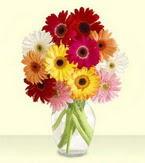 Kocaeli ucuz çiçek gönder  cam yada mika vazoda 15 özel gerbera