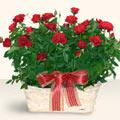 hediye çiçek yolla  11 adet kirmizi gül sepette