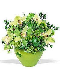 cam yada mika vazoda 5 adet orkide   Kocaeli çiçek , çiçekçi , çiçekçilik