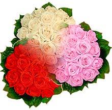 3 renkte gül seven sever   Kocaeli çiçek siparişi vermek