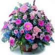 karisik mevsim kir çiçekleri  Kocaeli çiçekçi mağazası