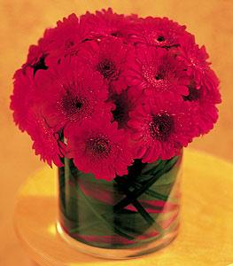 Kocaeli online çiçek gönderme sipariş  23 adet gerbera çiçegi sade ve sik cam içerisinde