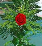 1 adet kirmizi gül buketi   çiçek online çiçek siparişi