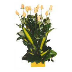 12 adet beyaz gül aranjmani  çiçek gönderme