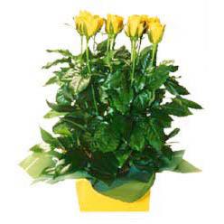 11 adet sari gül aranjmani  Kocaeli çiçek , çiçekçi , çiçekçilik
