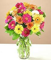 Kocaeli İnternetten çiçek siparişi  17 adet karisik gerbera