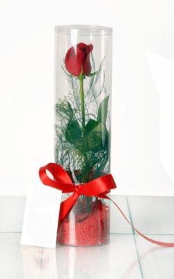 çiçek siparişi sitesi  Silindir vazoda tek kirmizi gül