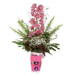 Kocaeli cicek , cicekci  cam yada mika vazo içerisinde tek dal orkide çiçegi