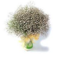 çiçek yolla  cam yada mika vazo içerisinde cipsofilya demeti
