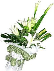 çiçekçi telefonları  3 dal kazablanka çiçegi ve yesillikler
