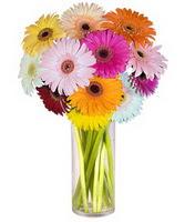 Kocaeli hediye sevgilime hediye çiçek  Farkli renklerde 15 adet gerbera çiçegi