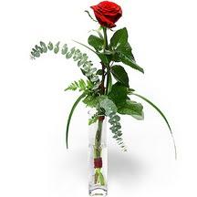 yurtiçi ve yurtdışı çiçek siparişi  Sana deger veriyorum bir adet gül cam yada mika vazoda