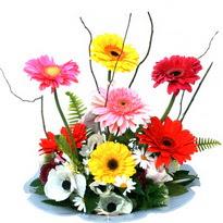 Kocaeli cicek , cicekci  camda gerbera ve mis kokulu kir çiçekleri