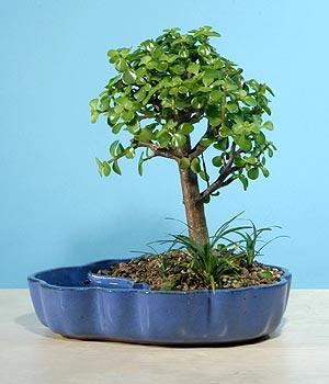 ithal bonsai saksi çiçegi  Kocaeli anneler günü çiçek yolla
