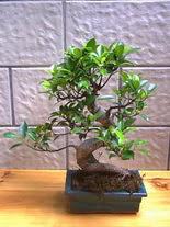 ithal bonsai saksi çiçegi  Kocaeli çiçek yolla , çiçek gönder , çiçekçi