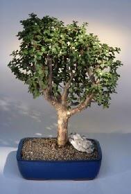 Kocaeli internetten çiçek satışı  ithal bonsai saksi çiçegi  Kocaeli anneler günü çiçek yolla