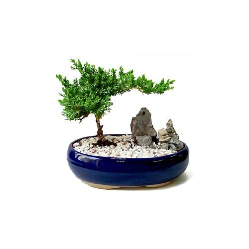 ithal bonsai saksi çiçegi  Kocaeli internetten çiçek satışı