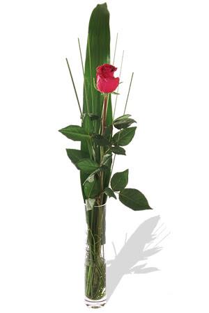 1 adet cam vazo içerisinde kirmizi gül  Kocaeli çiçek siparişi vermek