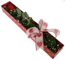 Tek kirmizi gül kutu içerisinde  çiçekçi telefonları