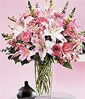 Kocaeli ucuz çiçek gönder  Kazablanka biçme vazoda