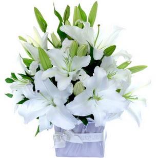 çiçek siparişi sitesi  2 dal cazablanca vazo çiçeği