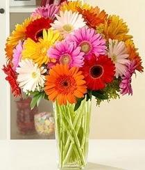 Kocaeli çiçek gönderme sitemiz güvenlidir  15 adet gerbera çiçek vazosu