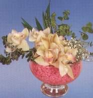 çiçek yolla  Dal orkide kalite bir hediye