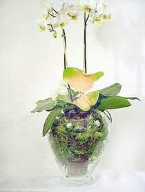 Kocaeli internetten çiçek siparişi  Cam yada mika vazoda özel orkideler