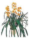 Kocaeli anneler günü çiçek yolla  Orchiede ithal büyük boy saksi