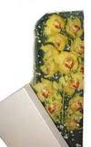 Kocaeli internetten çiçek satışı  Kutu içerisine dal cymbidium orkide