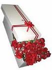 Kocaeli çiçekçiler  11 adet 1.kalite magnum güller