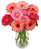 vazo içerisinde 13 adet gerbera çiçeği  Kocaeli uluslararası çiçek gönderme