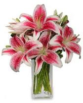 Vazo içerisinde 5 dal kazablanka çiçeği  kaliteli taze ve ucuz çiçekler