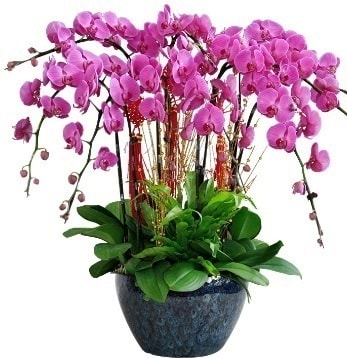 9 dallı mor orkide  yurtiçi ve yurtdışı çiçek siparişi