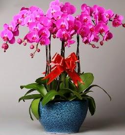 7 dallı mor orkide  Kocaeli İnternetten çiçek siparişi