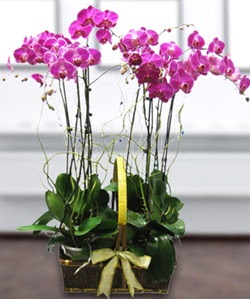 4 dallı mor orkide  çiçekçi telefonları