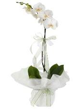 1 dal beyaz orkide çiçeği  çiçek online çiçek siparişi
