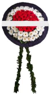 mozele çiçeği  Kocaeli çiçek yolla , çiçek gönder , çiçekçi