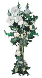 çiçek yolla  antoryumlarin büyüsü özel