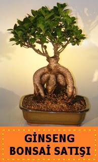 Ginseng bonsai satışı japon ağacı  Kocaeli çiçek mağazası , çiçekçi adresleri