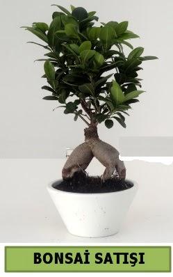 Bonsai japon ağacı satışı  Kocaeli çiçek gönderme sitemiz güvenlidir