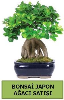 Bonsai japon ağacı satışı  Kocaeli internetten çiçek siparişi