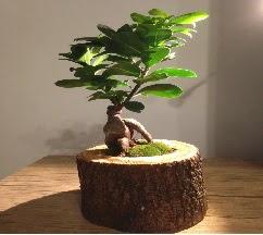 Doğal kütükte Bonsai japon ağacı satışı  14 şubat sevgililer günü çiçek