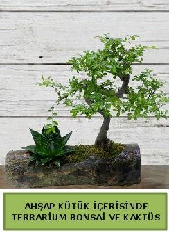 Ahşap kütük bonsai kaktüs teraryum  Kocaeli hediye sevgilime hediye çiçek