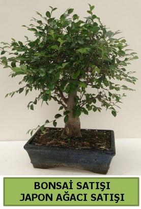 Minyatür bonsai japon ağacı satışı  Kocaeli çiçekçi mağazası
