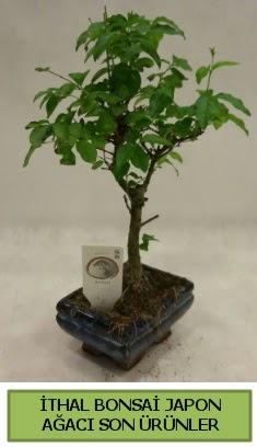 İthal bonsai japon ağacı bitkisi  Kocaeli çiçek yolla , çiçek gönder , çiçekçi